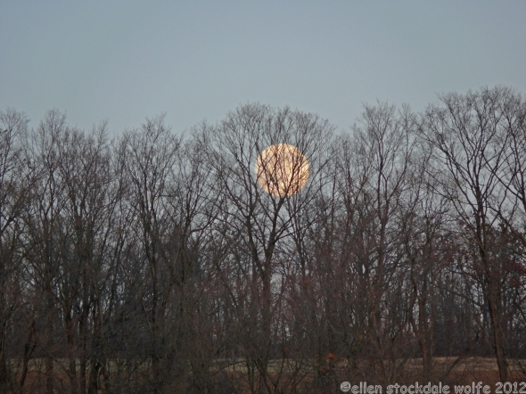 Moonrise through Filigree Trees