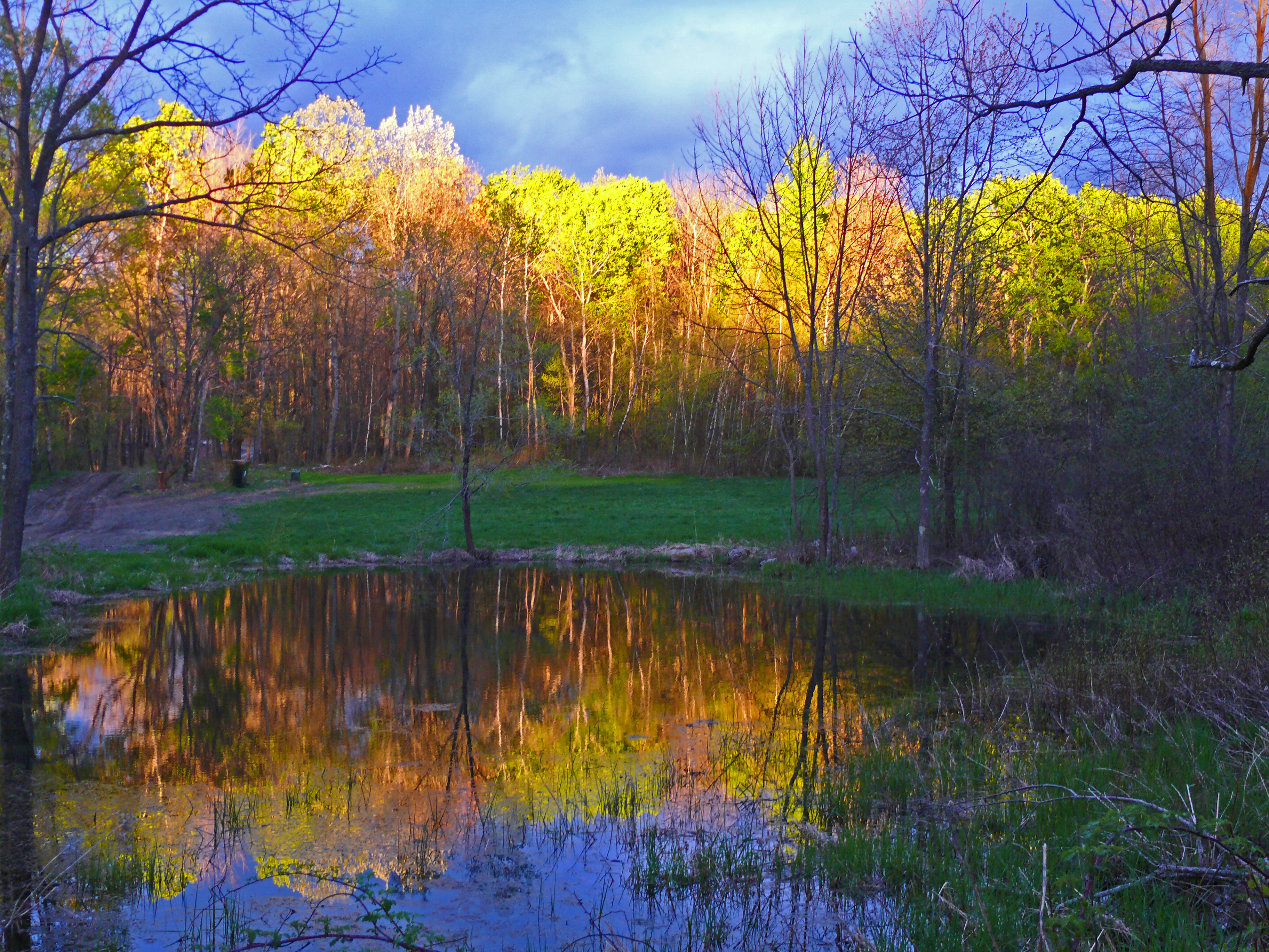Spring Landscape Photography Spring trees at sunsetSpring Landscape Photography