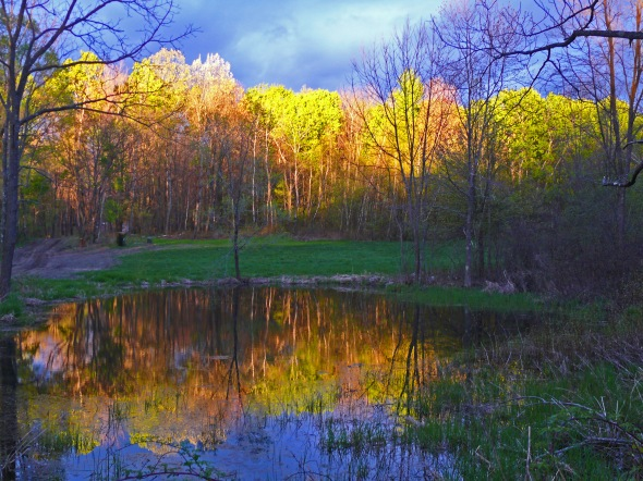 Spring Trees at Sunset  (digital photo)